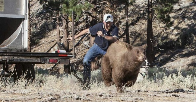 Nevada biologist sues bear activists for defamation