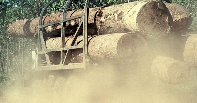 Watchdog says Vietnamese officials bribed by log smugglers