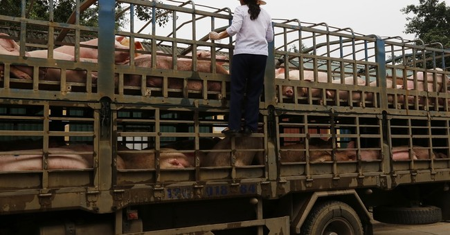 Vietnam puts pork on menus as farmers face glut, low prices