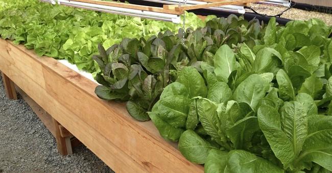 New Alaska handbook provides how-to on heated greenhouses