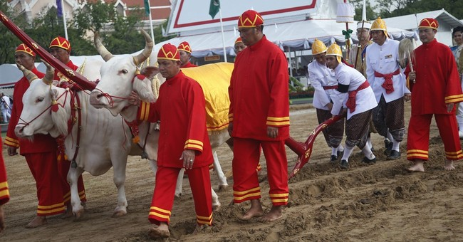 Thai king presides over annual royal rice plowing ceremony