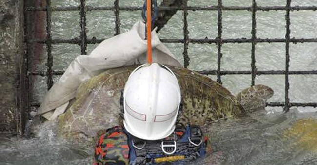 Malaysia firefighters rescue turtle trapped in power station