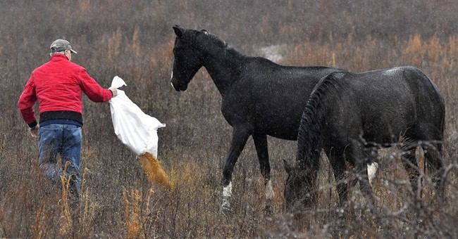 He was once labeled a horse thief; now he wants to save them