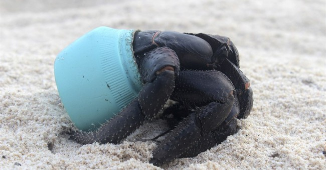 Tiny uninhabited Pacific isle has 38 million pieces of trash