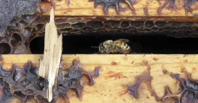 Bee industry buzzing: Stolen hives recovered in California