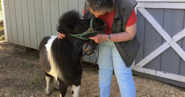 My sick little pony: Blind woman nurses pal back to health
