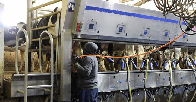 Puerto Ricans could ease South Dakota dairy labor shortage