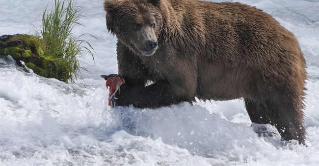 PBS airing live nature special from Alaska this summer