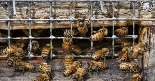 Survey finds US honeybee losses improve from horrible to bad