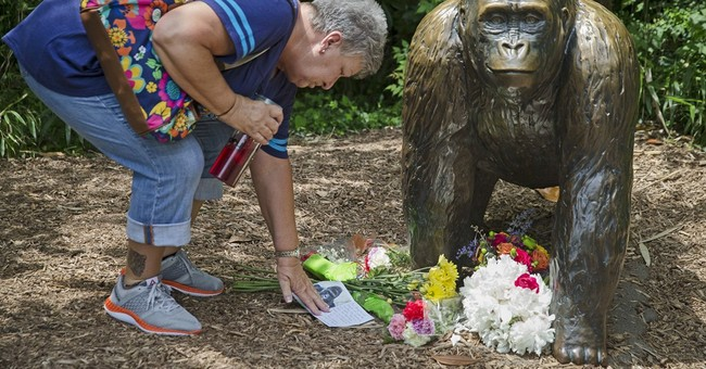 No public events at Ohio zoo where gorilla killed 1 year ago