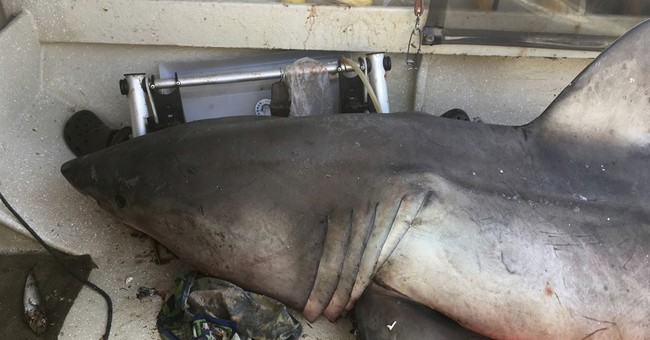 Shark leaps into boat and lands on Australian fisherman