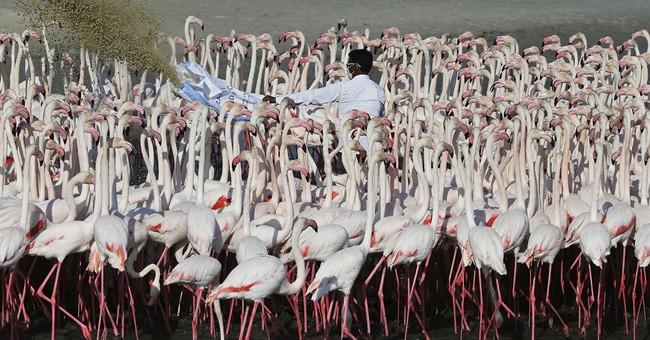 AP PHOTOS: Dubai high-rises slowly surround flamingo reserve