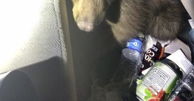 Driven by hunger: Police rescue bear cub trapped in car