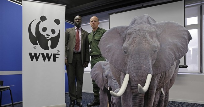 African rangers urge Hong Kong lawmakers to OK ivory ban