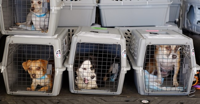 How to make plane trips easier on pets, and owners too