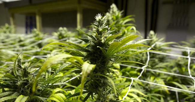 Court: Neighbors can sue pot grower for stinky smells