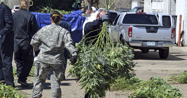 Colorado marijuana market funds busts of illegal growers