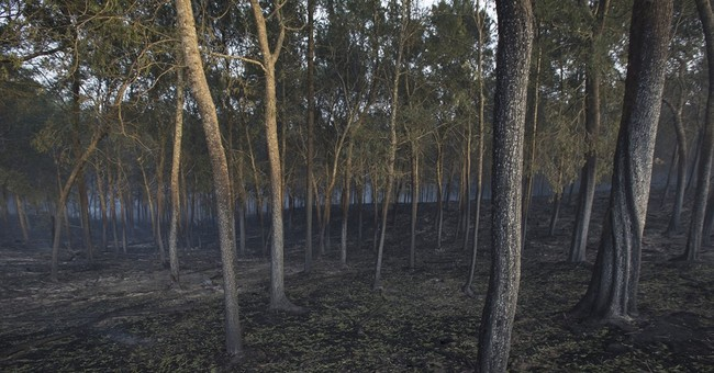 Firefighter dies combating South Africa's coastal blazes