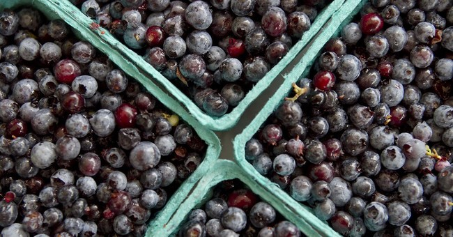 Fear of losing blueberry growers as prices drop, crop soars