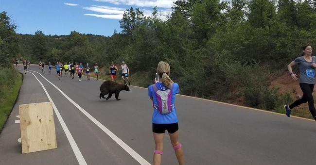 That's no normal runner: Bear crosses through Colorado race