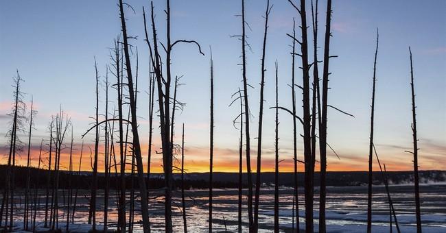 North Carolina man fell into Yellowstone hot spring, burned