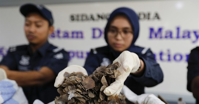 Malaysia seizes 400 kilograms of pangolin scales from Ghana
