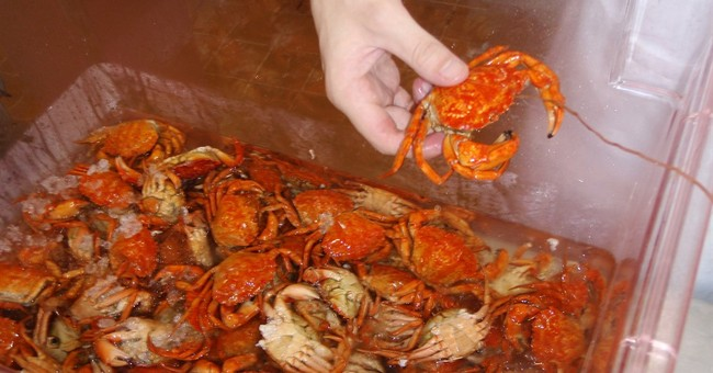If you can't beat 'em, eat 'em: Pastries may help crab woes