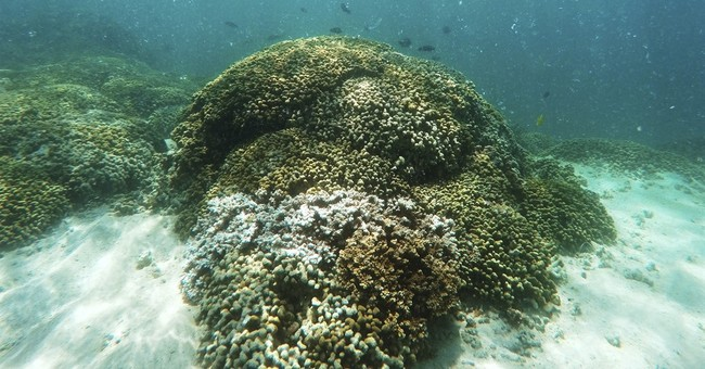 3-year global coral bleaching event easing, but still bad