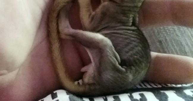 Pet squirrel that foiled Idaho home burglary returns to wild
