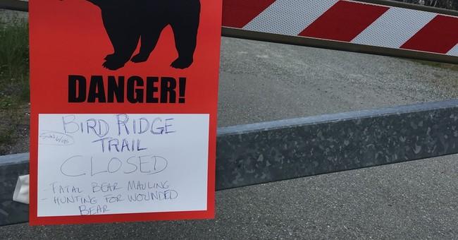 Black bears kill 2 in Alaska, including teen in extreme race