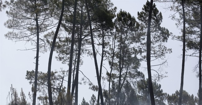 The Latest: Portuguese official says no fire planes crashed