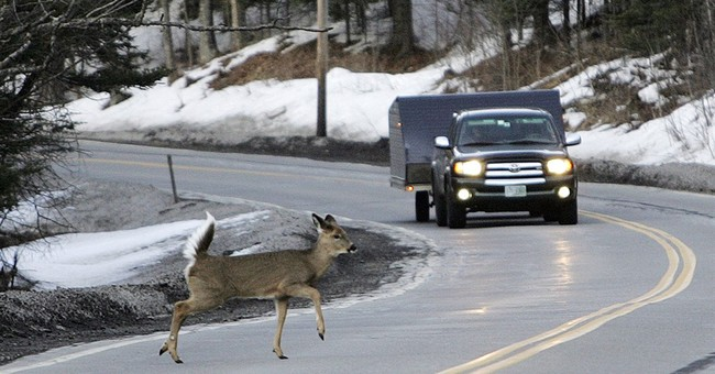 Oregon joins states where roadkill can be harvested for food