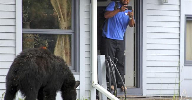 Young black bear roams Anchorage neighborhood, raids trash