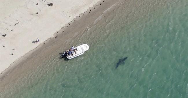 Q&A: Afraid of sharks? Flu, asteroids pose far greater risk
