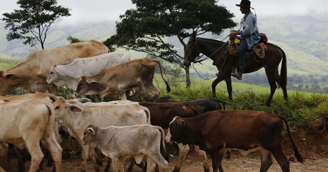 UN: Colombian rebels have handed over almost all weapons