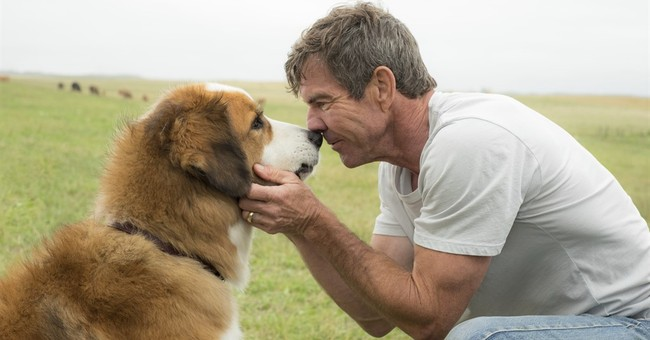 Premiere of 'A Dog's Purpose' canceled amid treatment issue