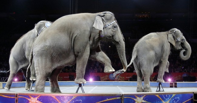 Final Ringling Bros. show at Nassau Coliseum sells out