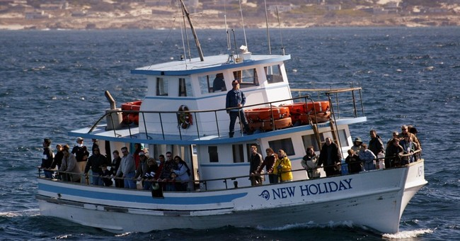 Whale-watching comes under scrutiny at South Africa meeting