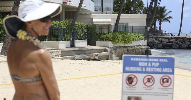 The Latest: Endangered Hawaiian monk seal born in Waikiki