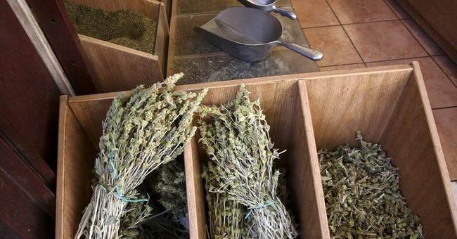 Looters strip Greek mountains of wild tea, rare plants
