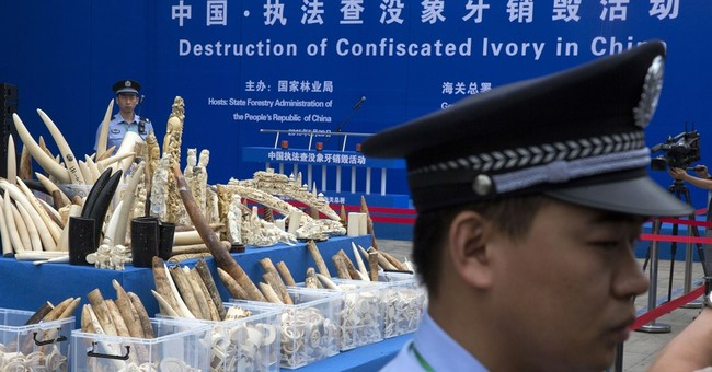 Watchdog says Chinese town is major ivory smuggling hub