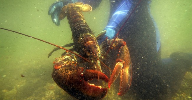 APNewsBreak: Sweden not giving up fight over lobster imports