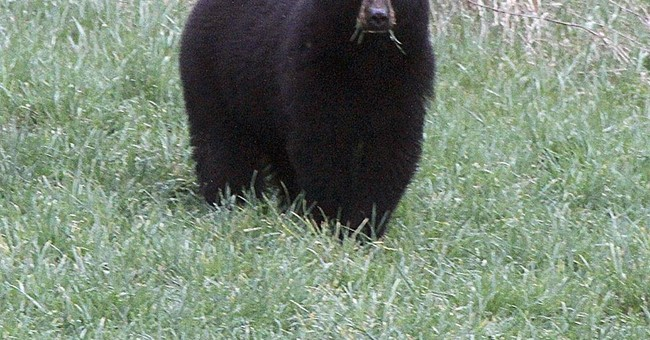 """Teen bit in head by bear wakes up to """"crunching sound"""""""