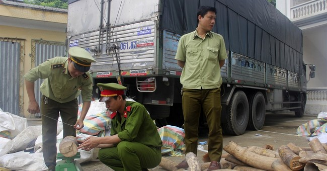 Vietnam seizes 3 tons of ivory smuggled from South Africa