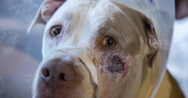 Minneapolis police investigate shooting of 2 dogs