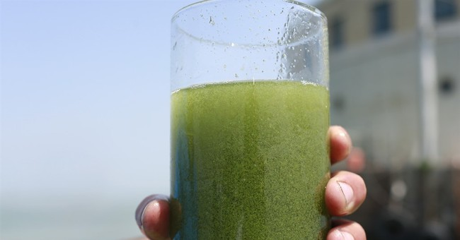 Scientists expect 'significant' algae bloom on Lake Erie