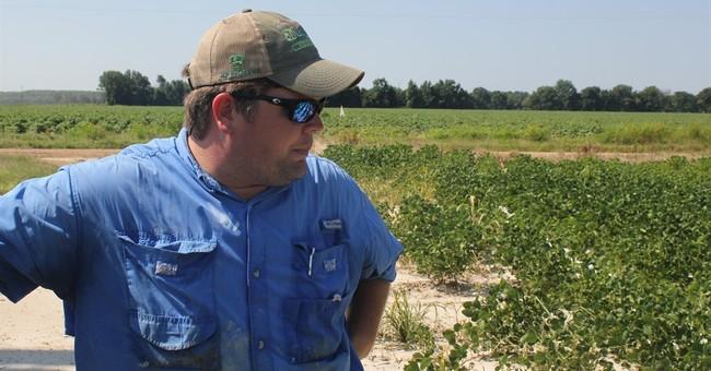 Weed killer turns neighbor against neighbor in farm country