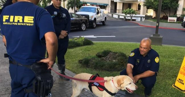 Arson dog searches Honolulu high-rise for ignitable liquids