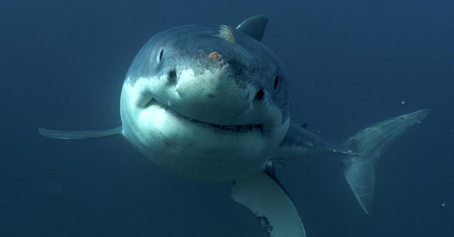 Discovery Channel asks Shark Week viewers to be donors, too