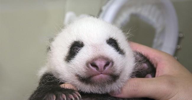 Tokyo to begin seeking names for star giant panda cub